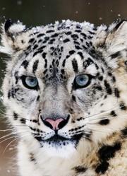 藏地被破坏:最无辜的是动物