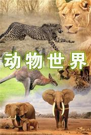 动物世界2021