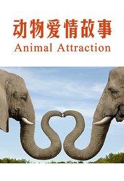动物爱情故事