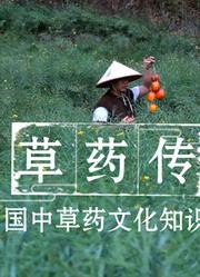【草药传】中国首部中草药知识片,从采摘到炮制的分享