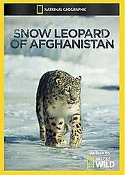 阿富汗雪豹