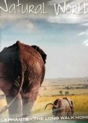 大象无国界