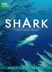 BBC:鲨鱼 预告