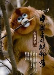 中国金丝猴部落