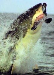 鲨鱼周2012