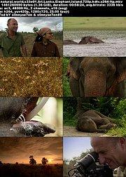 斯里兰卡: 象岛