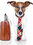 如果狗狗是你的咨询师