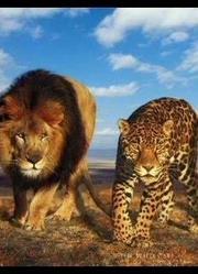 精彩狂野动物合集