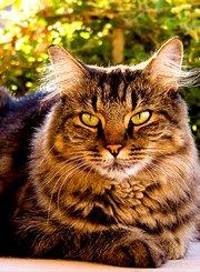 家有恶猫:社交危机