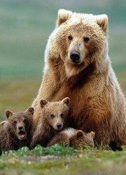 BBC:大熊日记