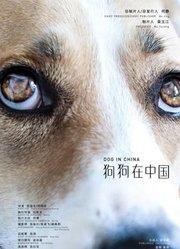 狗狗在中国