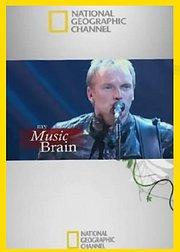 我的音乐大脑