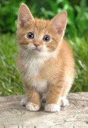 岩合光昭的猫步走世界:地中海