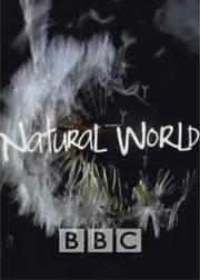 BBC自然世界