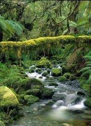 无人荒野:亚马逊