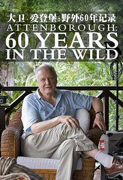 大卫·爱登堡:野外60年记录