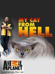 家有恶猫第4季