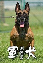 军犬训练营