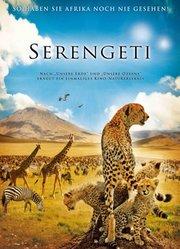 非洲 塞伦盖蒂国家公园