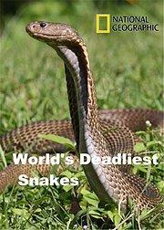 世界上最致命的蛇