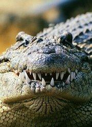 BBC:鳄鱼的神秘生活