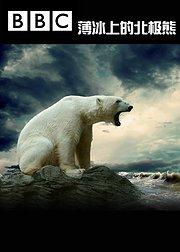 薄冰上的北极熊