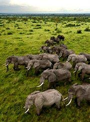 地球变种:非洲