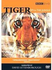 BBC:虎丛林中窥探