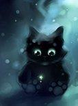 养黑猫不吉利吗?