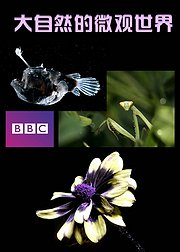 BBC大自然的微观世界
