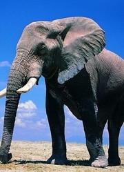 BBC:大象日记第2季(预告)