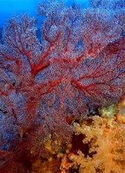 拍摄恐怖的死亡黑色珊瑚礁