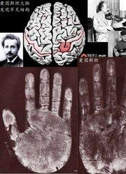 愛因斯坦大腦