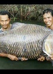 都是巨型的鱼!包你没见过