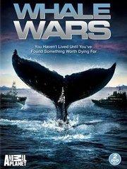 护鲸大战第4季