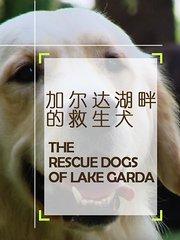 加尔达湖畔的救生犬