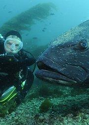 从大海深处回归的巨坚鳞鲈
