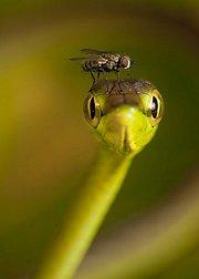 美国最佳自然摄影大赛