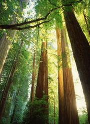 当这地球没有树