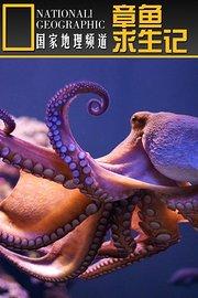 寰宇地理之章鱼求生记