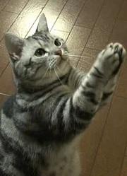 猫咪物语第1季
