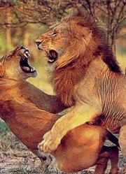 最浪漫性爱的动物排行榜