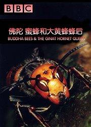 佛陀、蜜蜂和大黄蜂蜂后