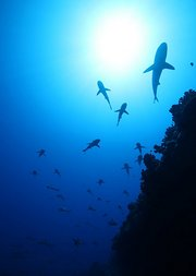 奇幻海洋生物