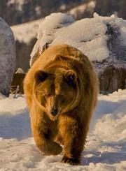 蒙大拿灰熊之家