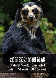 绿荫深处的眼镜熊
