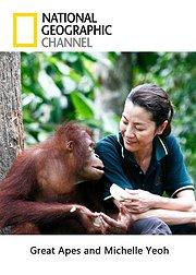 杨紫琼与红毛猩猩