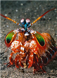 神奇的皮皮虾