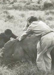 野生动物救援组