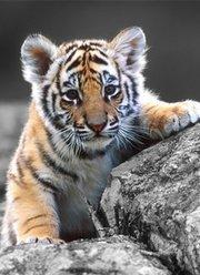 动物世界新世界狂野篇